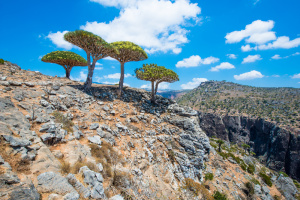 haunting-socotra-tree-dragon-yemen