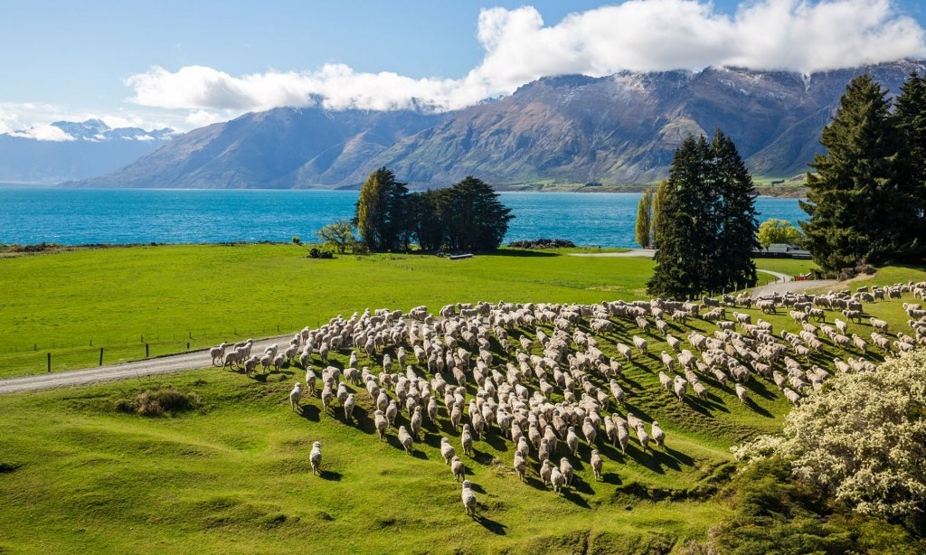 Foto: Southern Discoveries | Tourism New Zealand